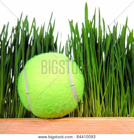 Tennis Ball On Grass Background
