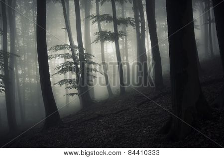 Scary forest with fog on Halloween