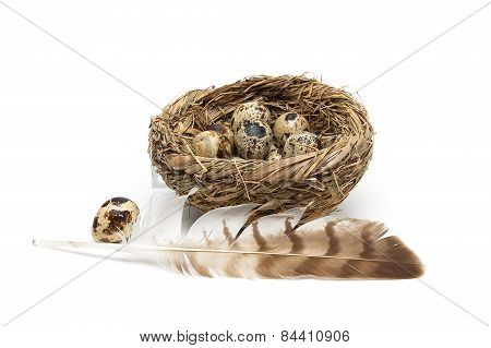 Feather Of A Bird And Quail Eggs In A Nest On A White Background
