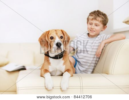 Little Boy With Beagle On The White Sofa