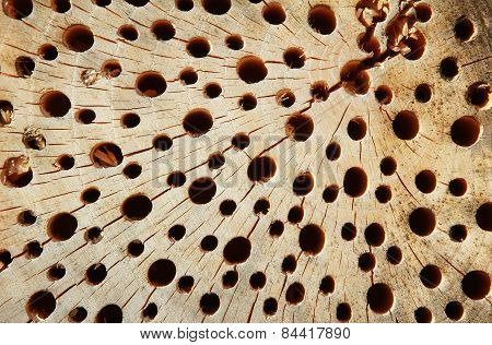 Holey Wooden Background With