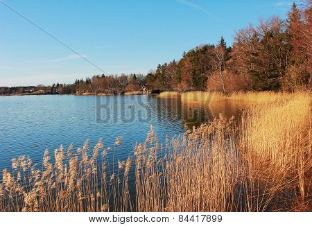 Idyllic Lake Shore Seehamer See In Autumn