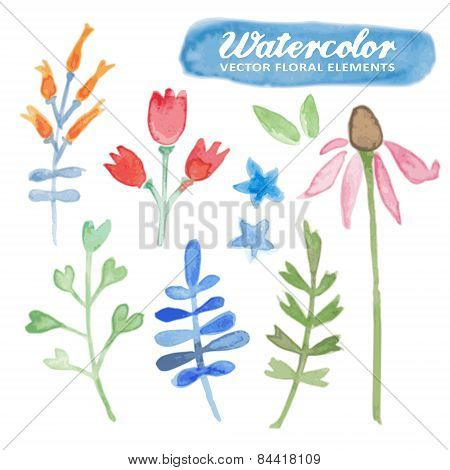 Set Of Watercolor Hand Drawn Floral Elements, Vetor