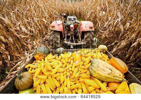 Tractor With Trailer In Corn Field