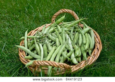 Green Bean Basket