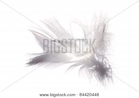 Feather On White Paper
