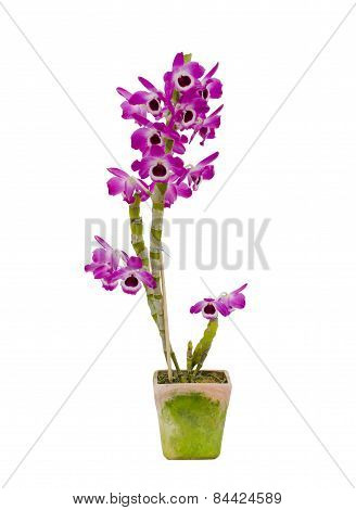 Nobile Orchid Isolated On White Background
