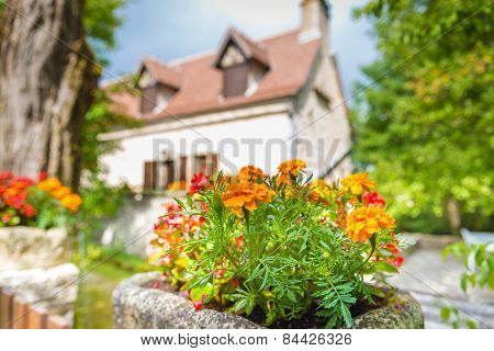 Flowers In Front Of A French Home