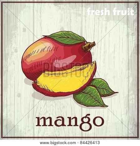 Hand drawing illustration of mango. Fresh fruit sketch background
