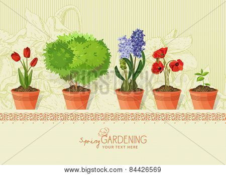 Spring plants and flowers in clay pot on beige background