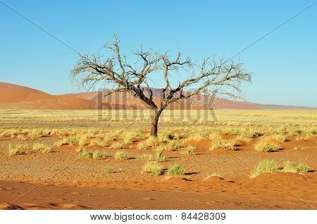 Dead Tree And Dunes in Namibia