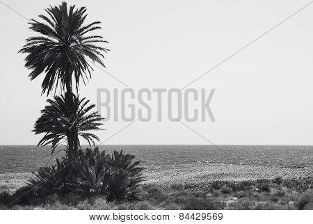 Mediterranean Pebble Beach And Palm Trees In Almeria. Spain