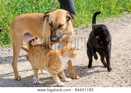 Brown Dog And Two Cats Together