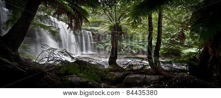 Waterfall in a rain forest in Tasmania