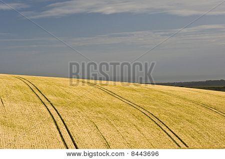 Ditchling Beacon Landscape