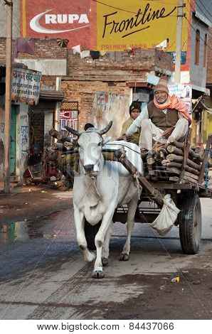 Man And Boy On Bullock Cart At The Road