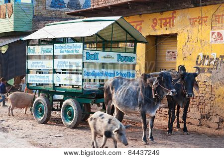 School Bus Is Bullock Cart With Schoolchildren On The Road In Vrindavan