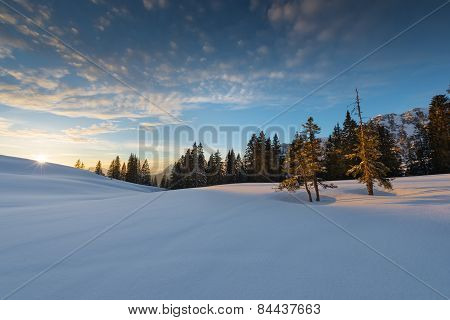 two trees standing in the sunset light of austrian winter landscape