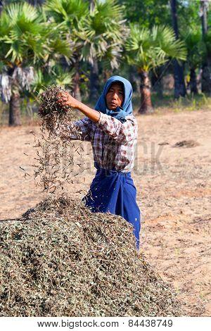 Burmese Man