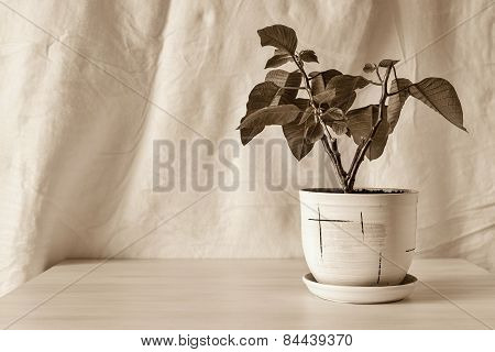 Vertical Sepia Photo Houseplant