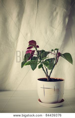 Retro Photo Houseplant On An Empty Background