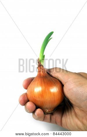Growing Onion On Right Hand