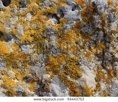 Moss Lichen On The Rocks Orange Sandstone.