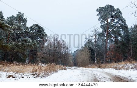 Dirt Road In The Winter Forest