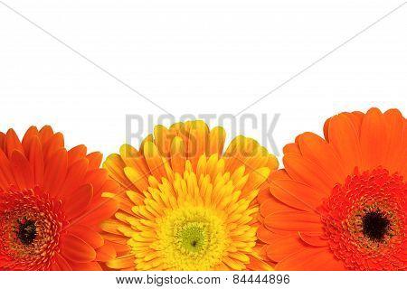 Orange And Yellow Chrysanthemum Flowers