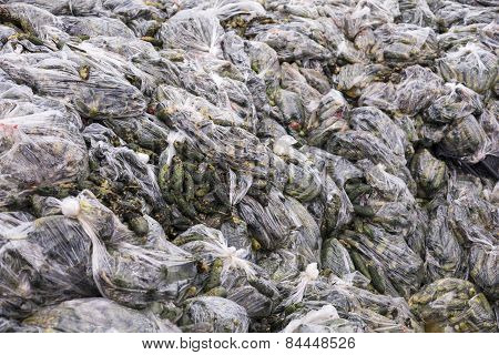 Rotten Cucumbers In Plastic Sacks On The Landfill