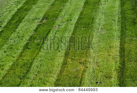 Mowed Green Grass With Parallel Tracks