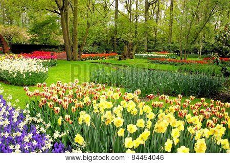 Spring flowers, Keukenhof Gardens