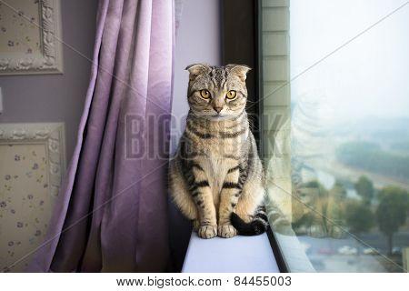 Beautiful Cat Sitting On A Window