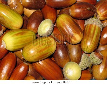 Acorns, texture, background, autumn, nature