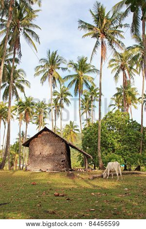 Traditional Village Of Palawan, In The Philippines