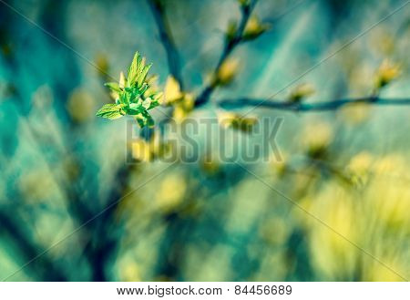 Life begins, life awakens - spring leaves