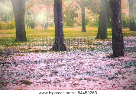 Beautiful Fantastic Of Flowers Falling In Colorful Park Use For Imagine Autumn Season Outdoor Backgr