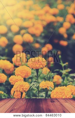 Yellow Marigold Flower With Wood Table In Garden.