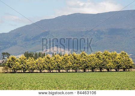 Rural Tasmania