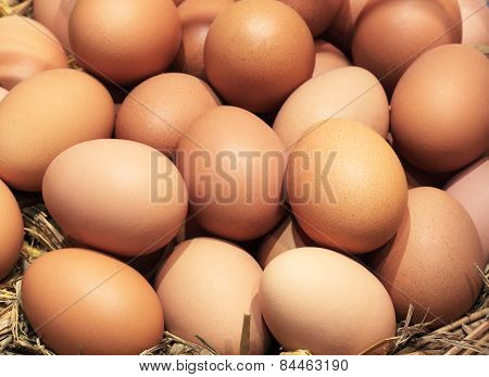 Eggs Many Eggs