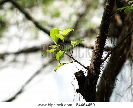Green Leaf On Dry Branch
