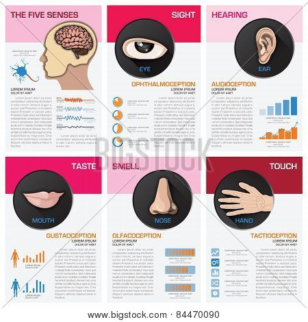 The Five Senses Chart Diagram Infographic
