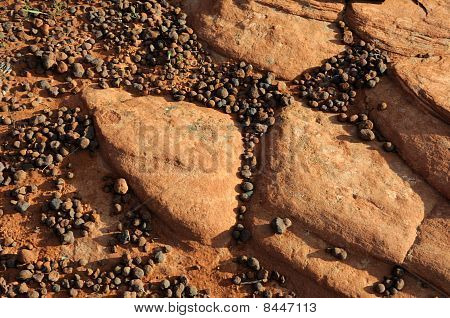 Sandstone and Pebble Background