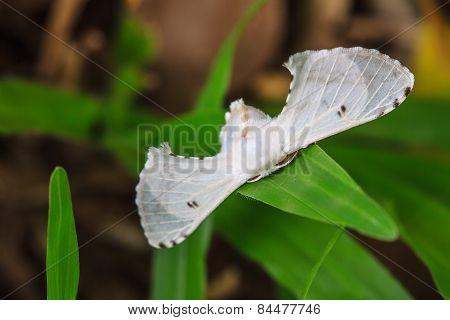 Close up of moth