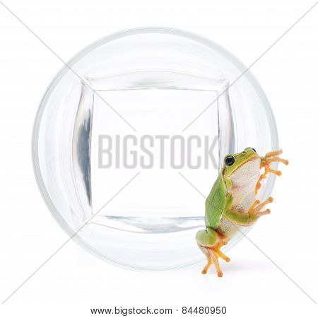 Frog In Glassful