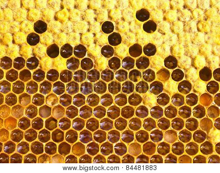 Cocoons Bee, Nectar, Honey And Pollen