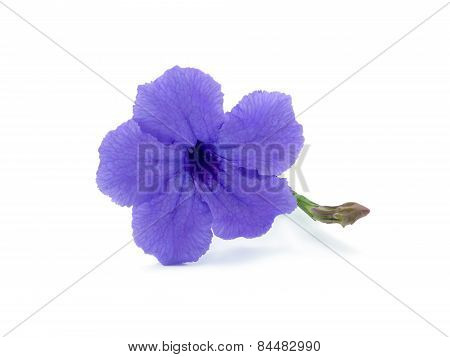 A Purple Flower Blooming
