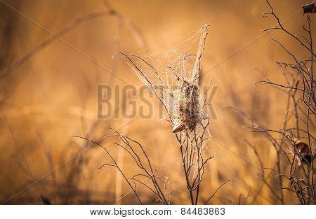 Spider's web traps