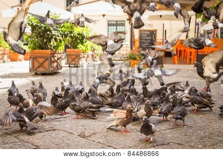 A flock of pigeons eating bread