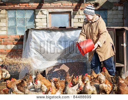 woman feeding chickens on  farm